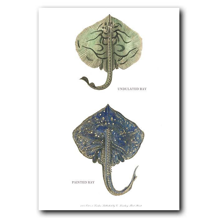 Fine art print for sale. Undulated & Painted Rays