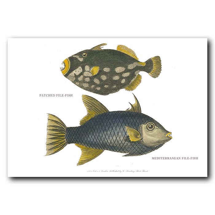 Fine art print for sale. Trigger Fish