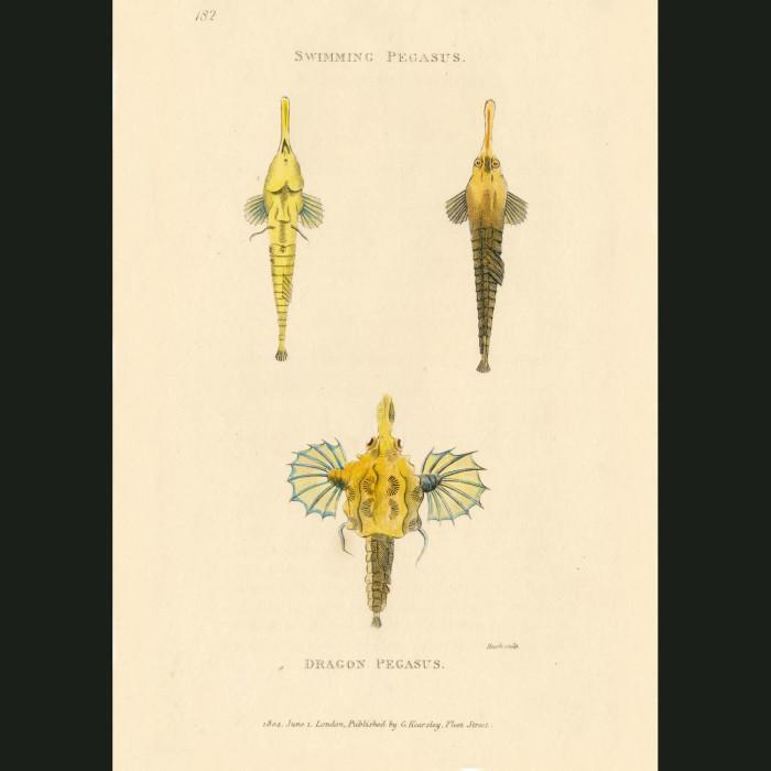 Fine art print for sale. Swimming Pegasus & Dragon Pegasus fish.