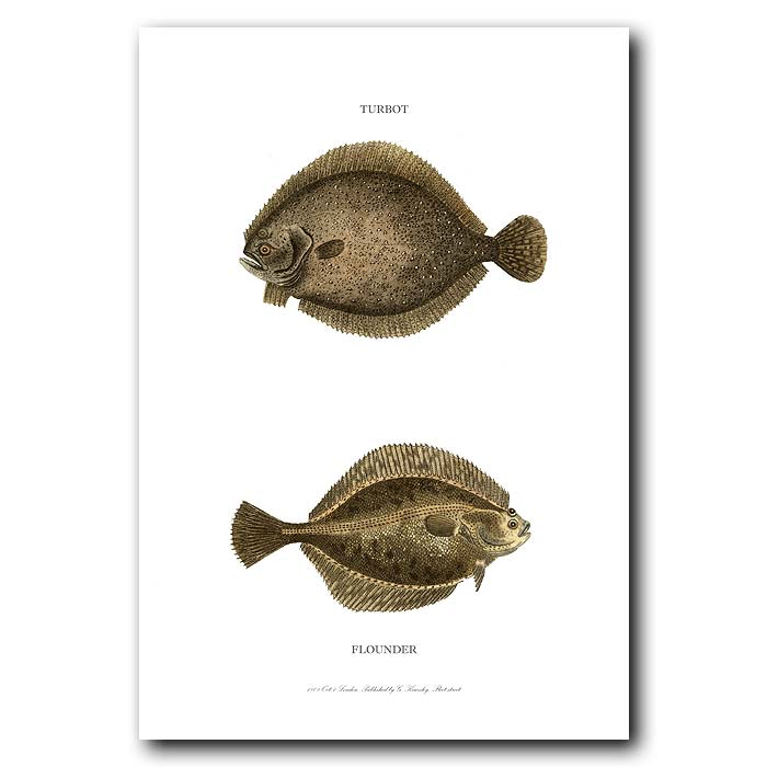Fine art print for sale. Turbot and Flounder Fish