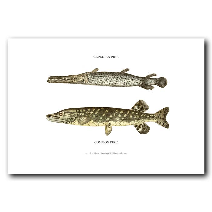 Fine art print for sale. Common Pike & Cepedian Pike