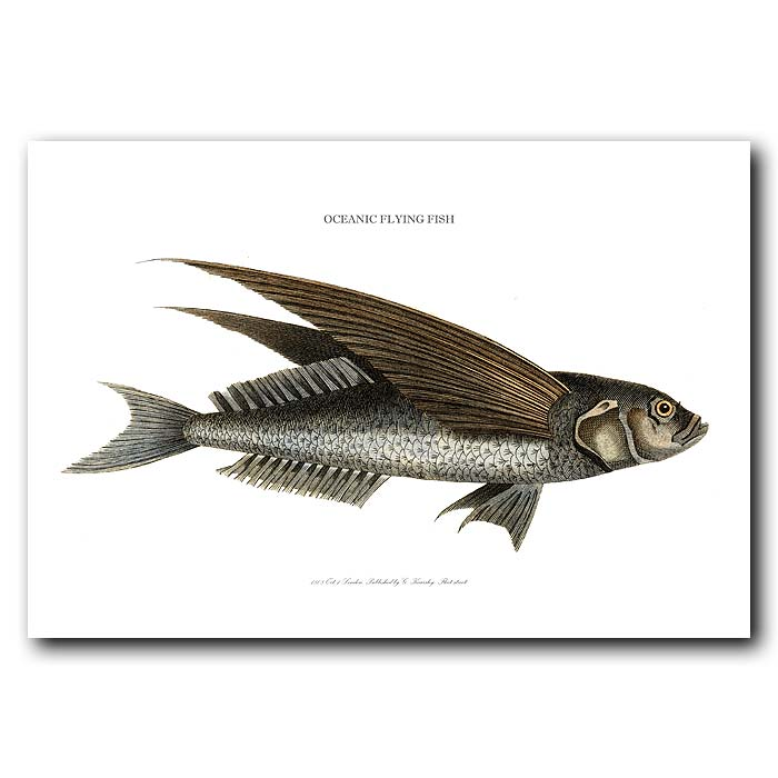 Fine art print for sale. Oceanic Flying Fish