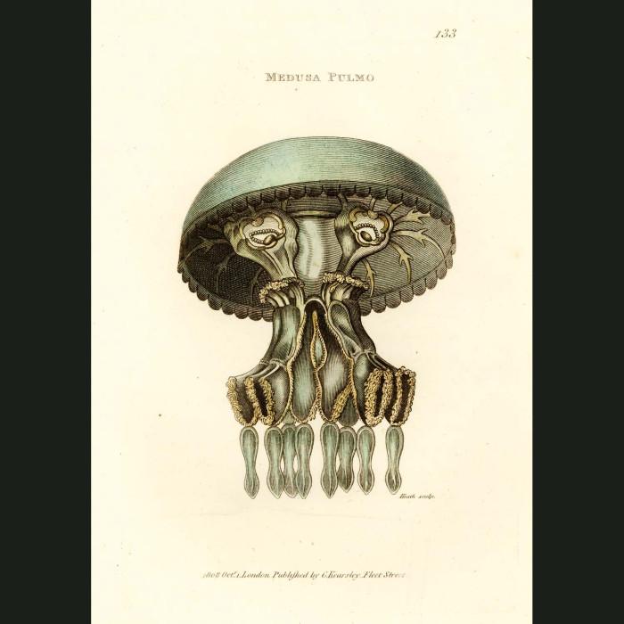 Fine art print for sale. Medusa Jellyfish