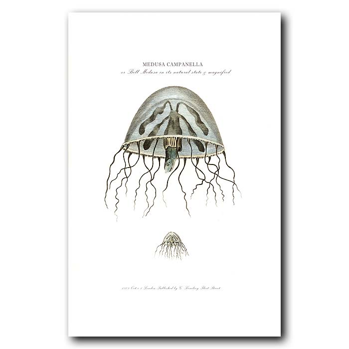 Fine art print for sale. Bell Medusa Jellyfish