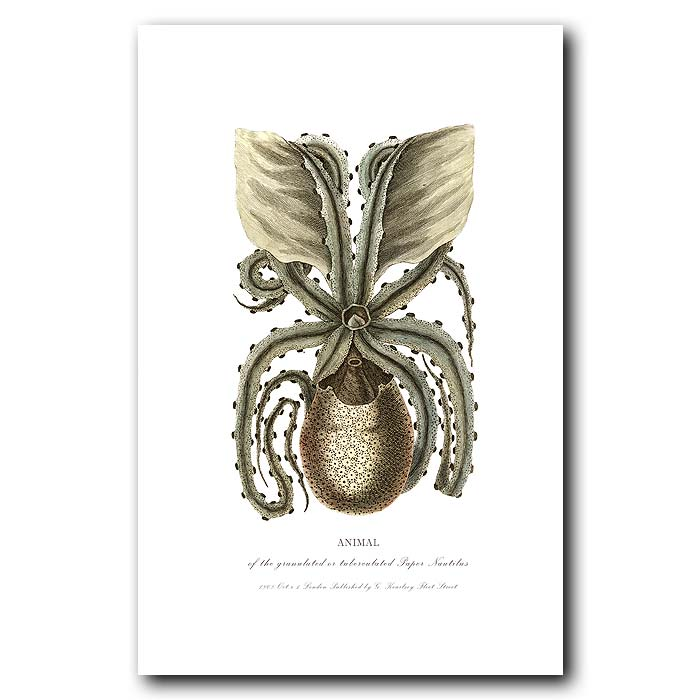 Fine art print for sale. Animal of the Paper Nautilus