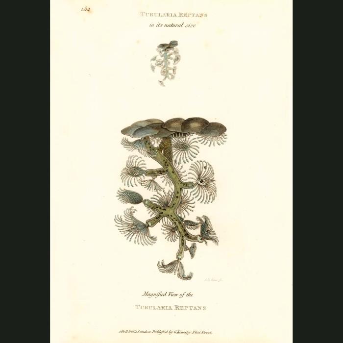 Fine art print for sale. Soft Coral
