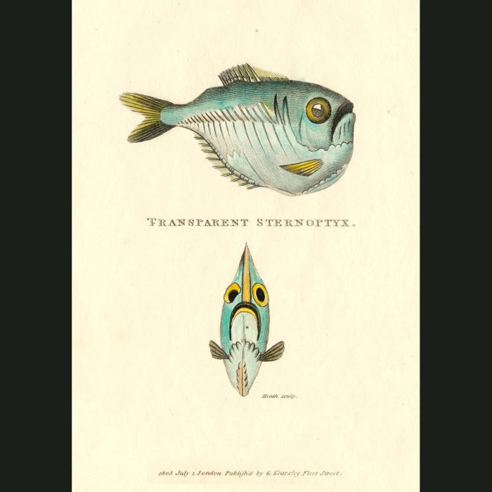 Fine art print for sale. Transparent Fish
