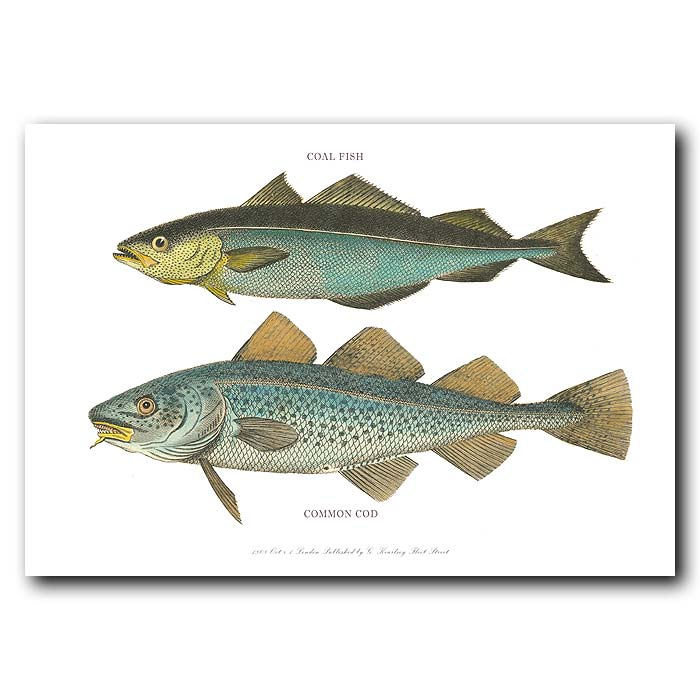 Fine art print for sale. Coal fish & Cod Fish