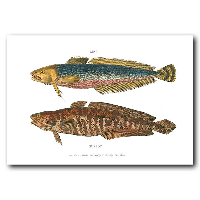 Fine art print for sale. Ling and Burbot Fish