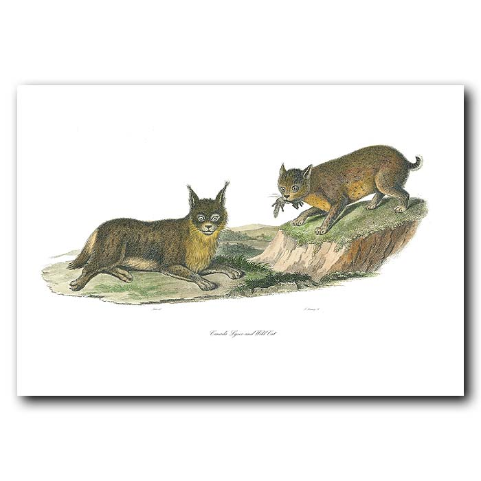 Fine art print for sale. Canada Lynx And Wild Cat