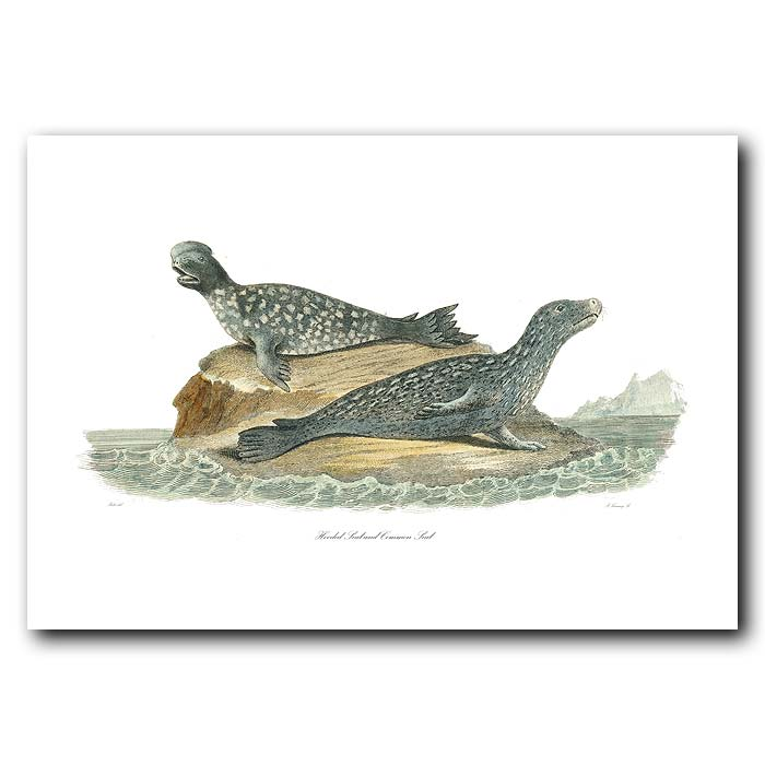 Fine art print for sale. Common Seal & Hooded Seal