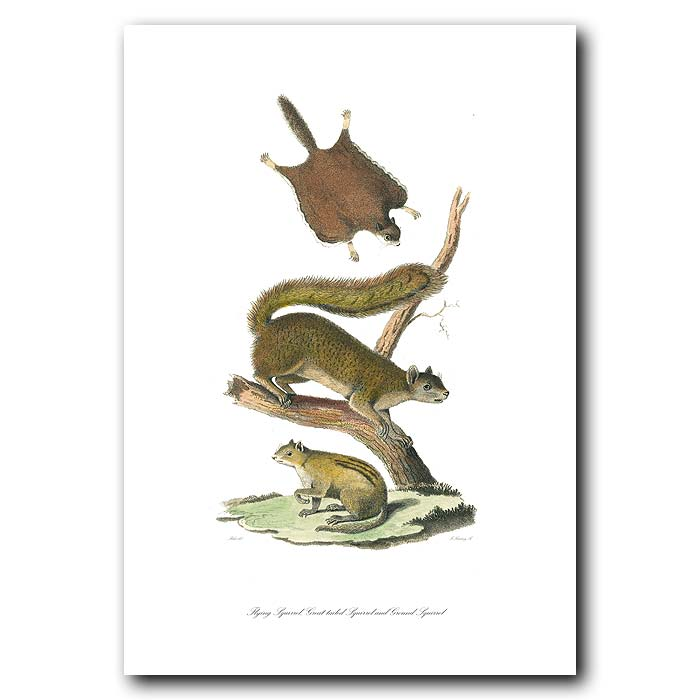 Fine art print for sale. Flying, Ground & Great-Tailed Squirrels
