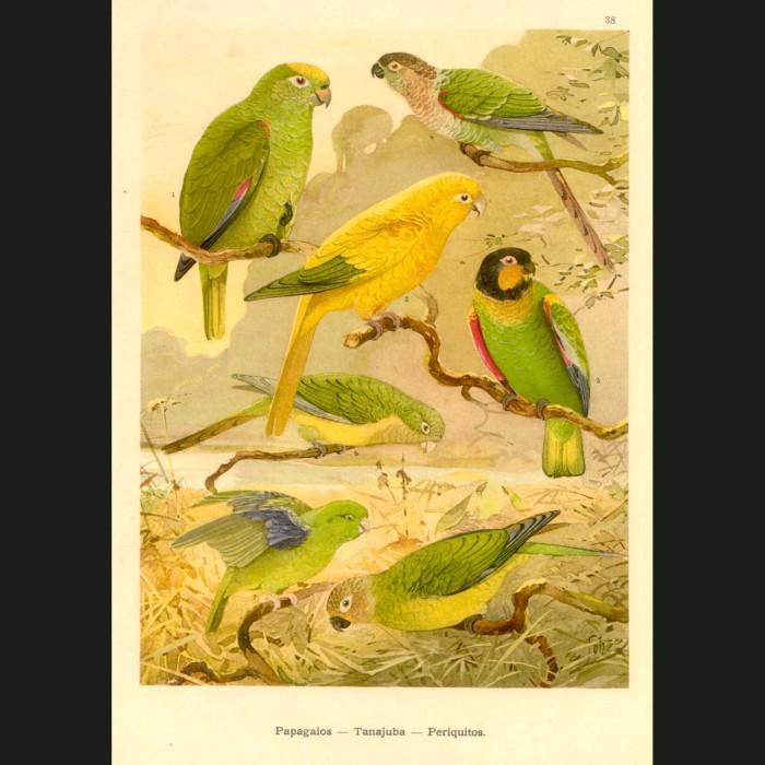 Fine art print for sale. Parrots Of The Amazon