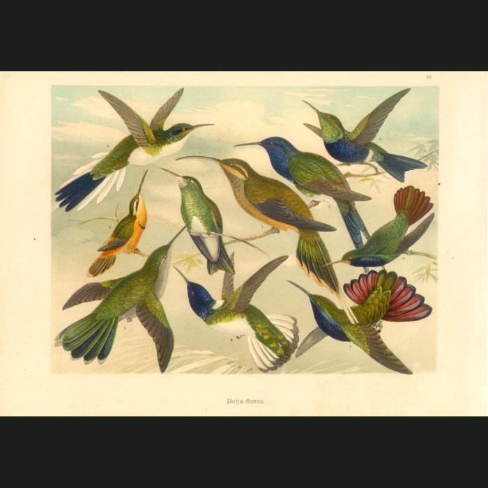 Fine art print for sale. Hummingbirds Of The Amazon
