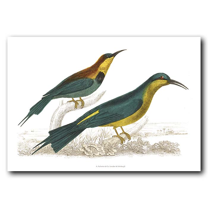 Fine art print for sale. Red-Winged & Blue-Headed Bee-Eaters