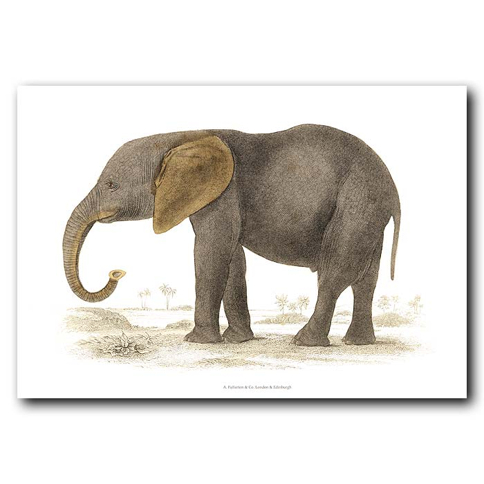Fine art print for sale. Young African Elephant
