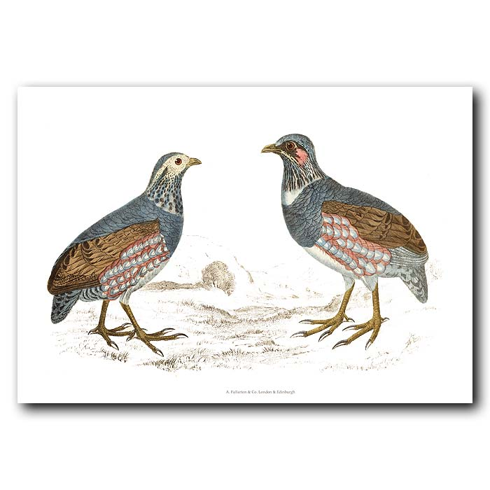 Fine art print for sale. Large-Footed Partridge
