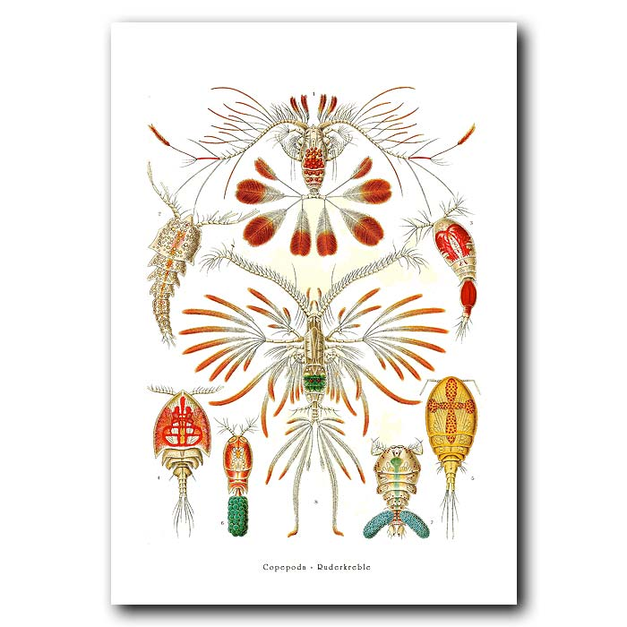Fine art print for sale. Small Crustaceans