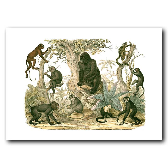Fine art print for sale. Gorilla, Monkeys & Lemurs