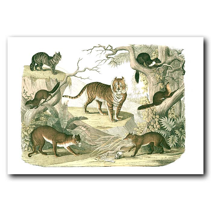 Fine art print for sale. Tiger, Puma & Martens