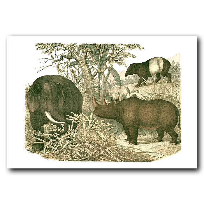 Fine art print for sale. Elephant, Tapir & Rhinoceros