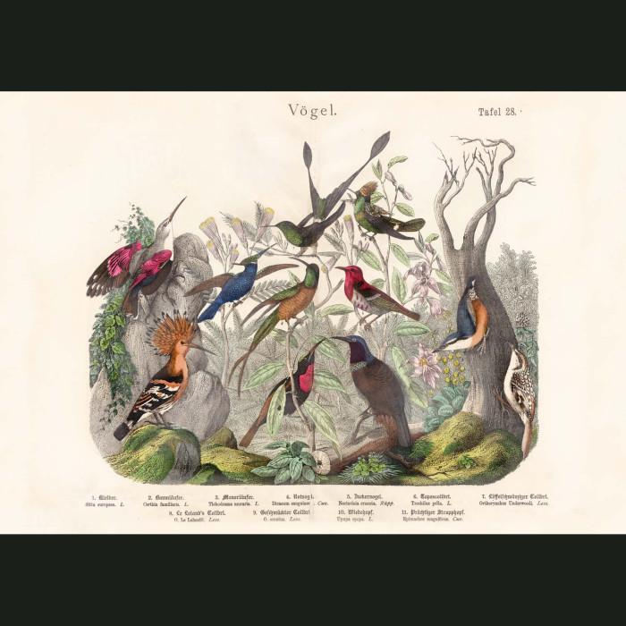 Fine art print for sale. Hummingbirds, Bird Of Paradise & Hoopoe