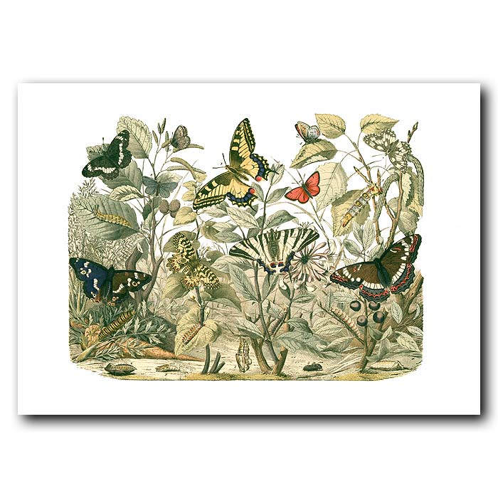 Fine art print for sale. American Swallow-Tail Butterfly