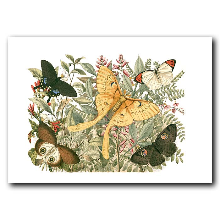 Fine art print for sale. Giant Golden Swallow-Tail Butterfly