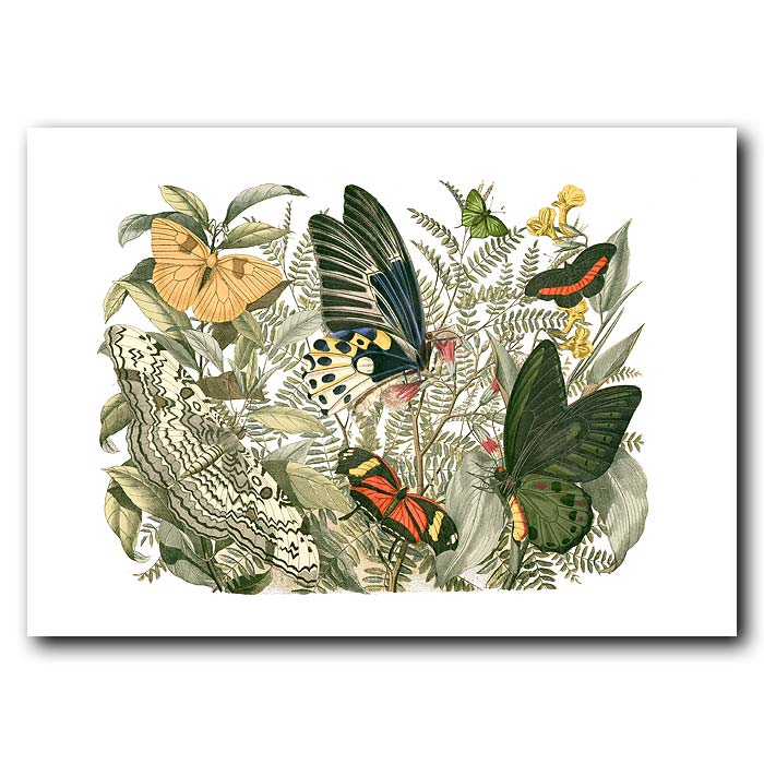 Fine art print for sale. Queen Alexandra's Birdwing Butterfly
