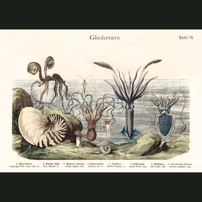 Fine art print for sale. Nautilus,Octopus And Squid