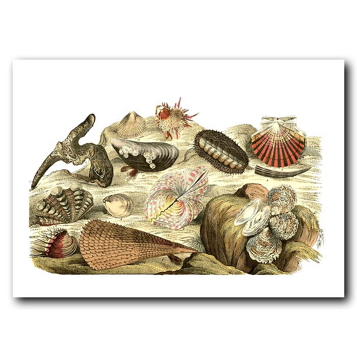 Fine art print for sale. Scallop & Oyster Shells