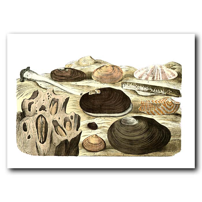 Fine art print for sale. Clam & Razor Shells