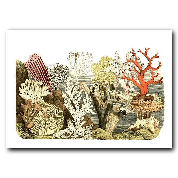 Fine art print for sale. Coral & Anenomes