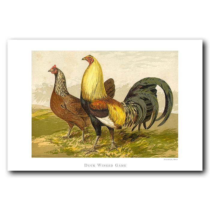 Fine art print for sale. Duck Winged Game Bantams