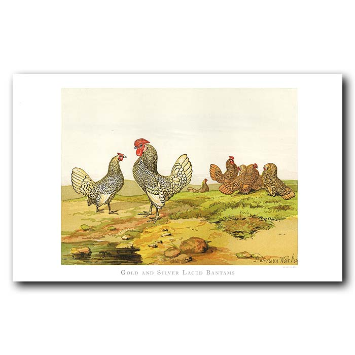 Fine art print for sale. Gold And Silver Laced Bantams