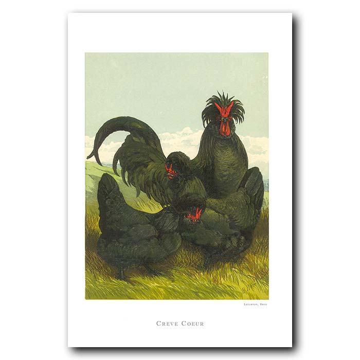 Fine art print for sale. Creve Couer Chickens