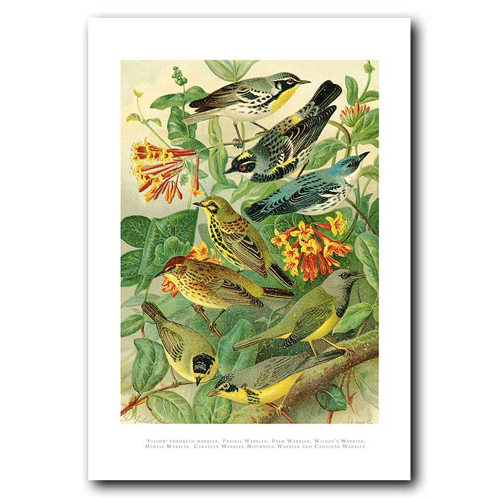 Fine art print for sale. Warblers