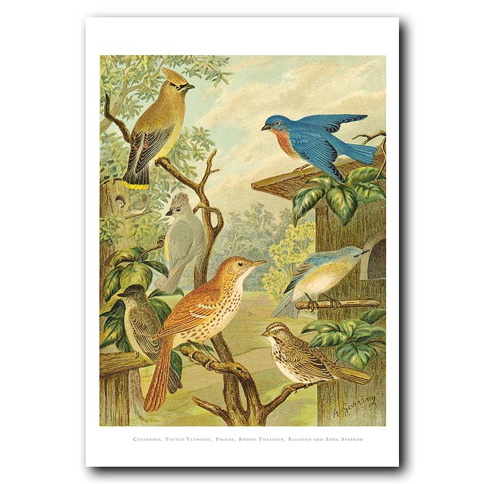 Fine art print for sale. Titmouse,Cedarbird & Sparrow