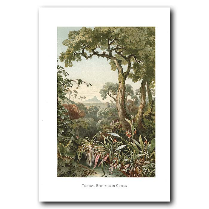 Fine art print for sale. Tropical Trees And Epithytes