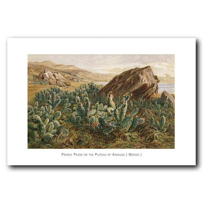 Fine art print for sale. Prickly Pears In Mexico