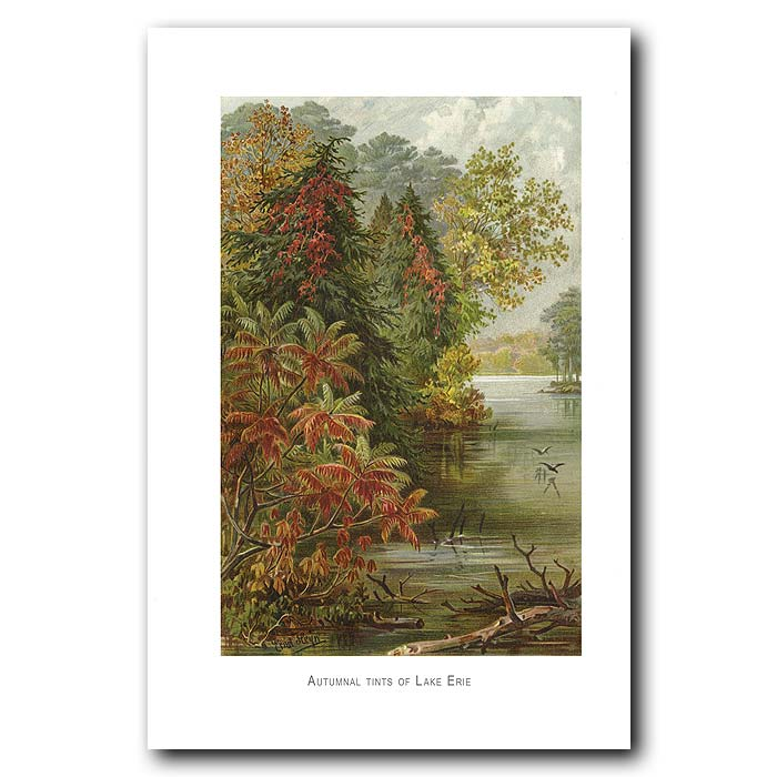 Fine art print for sale. Autumnal Trees On Lake Eyrie