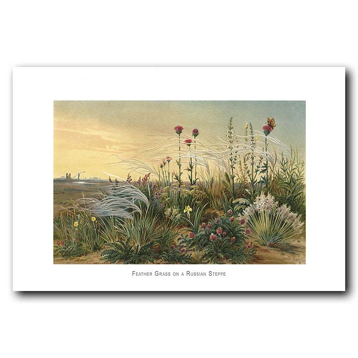 Fine art print for sale. Feather Grass On The Russian Steppe