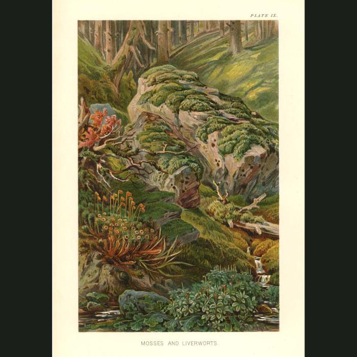 Fine art print for sale. Moss