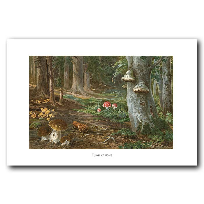 Fine art print for sale. Types Of Fungi. Boletus, Agaricus And Polypus