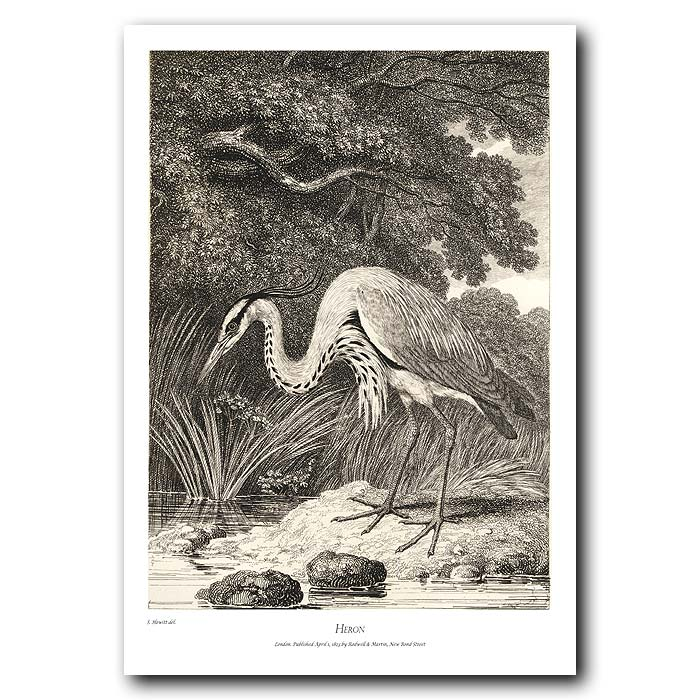 Fine art print for sale. Heron