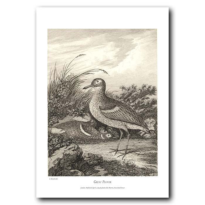 Fine art print for sale. Great Plover