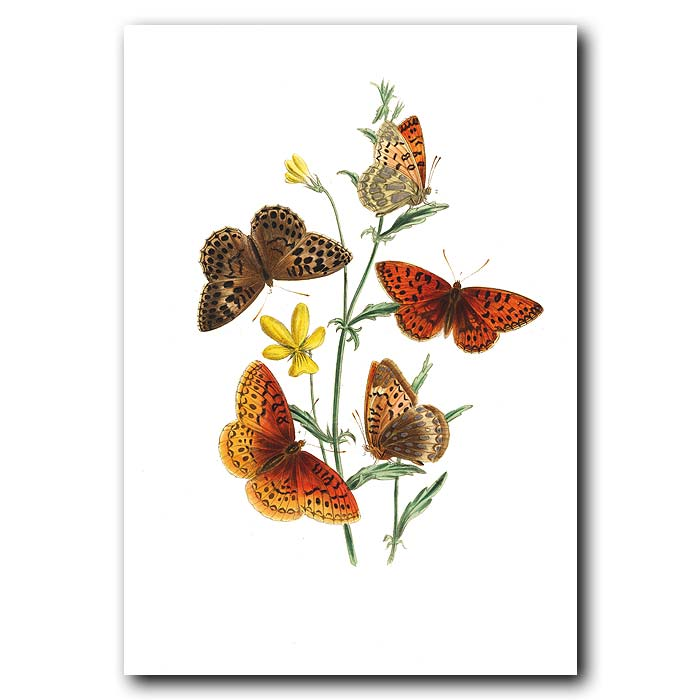 Fine art print for sale. Aphrodite Butterfly