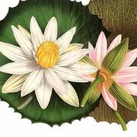 Botanical Art