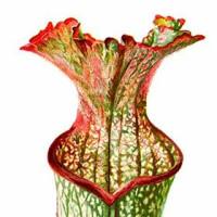 Carnivorous Plant Art