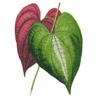 Leaves & Foliage Art